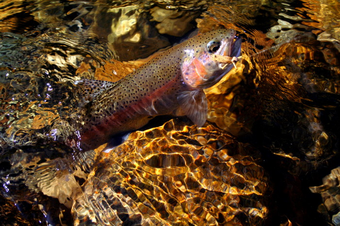Hoppers are popular late summer and fall patterns on the Big Wood River.