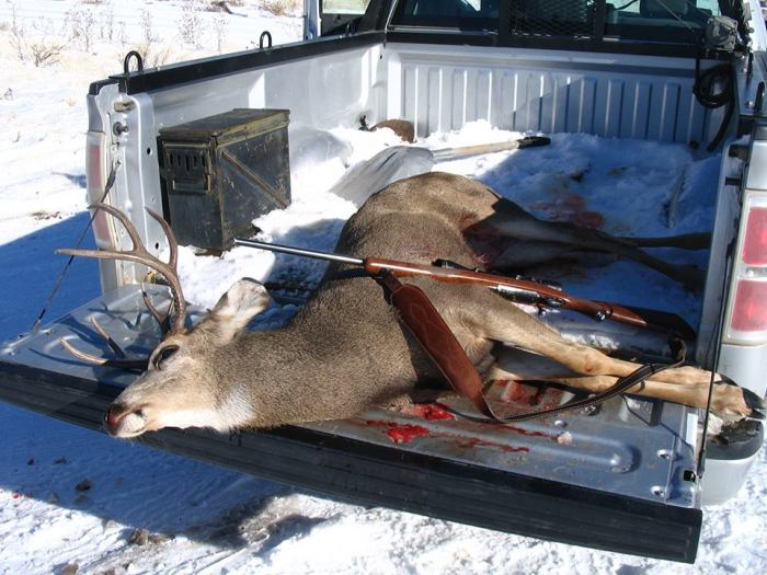 The father and son who poached this mule deer during bow season near Mountain Home will spend time behind bars and forfeit the hunting privileges for many years to come. (CAP photo)
