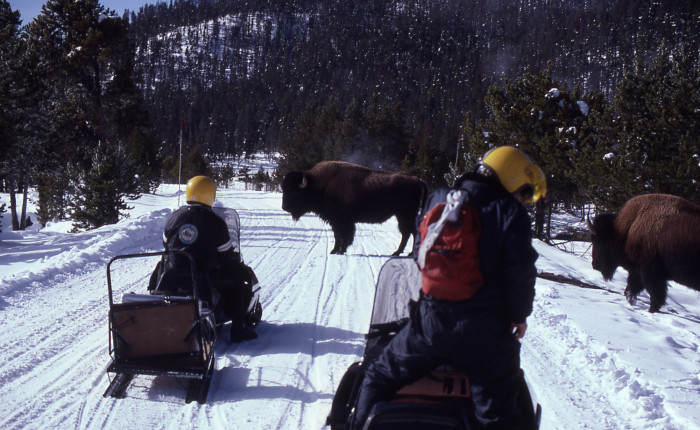 With the opening of more snowmobile and snow coach routes interaction with wildlife and be expected. (NPS photo)