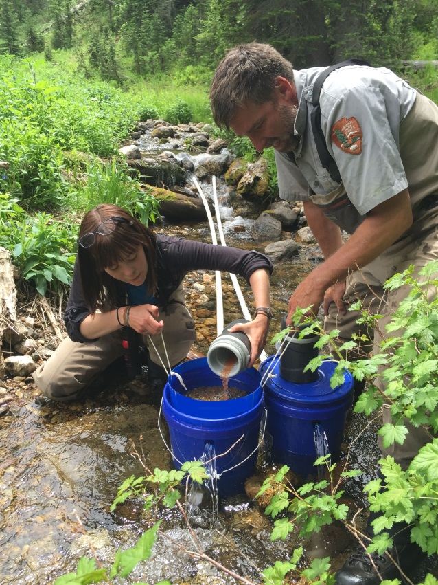 Grayling eggs-NPS Biologist Jeff Arnold and Student Conservation Association Intern Emily Mathieson place westslope cutthroat  fertilized eggs, into an incubator held within a tributary of the Grayling Creek watershed. (NPS photo)